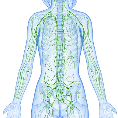 Anatomy and Pathophysiology Series; The Lymphatic System Webinar