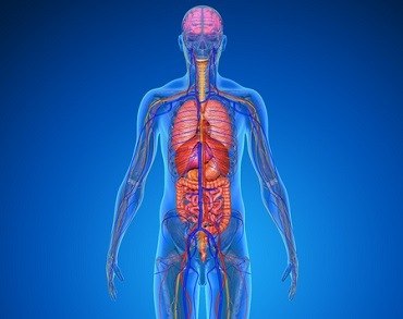 Anatomy and Pathophysiology Series; Obesity Webinar